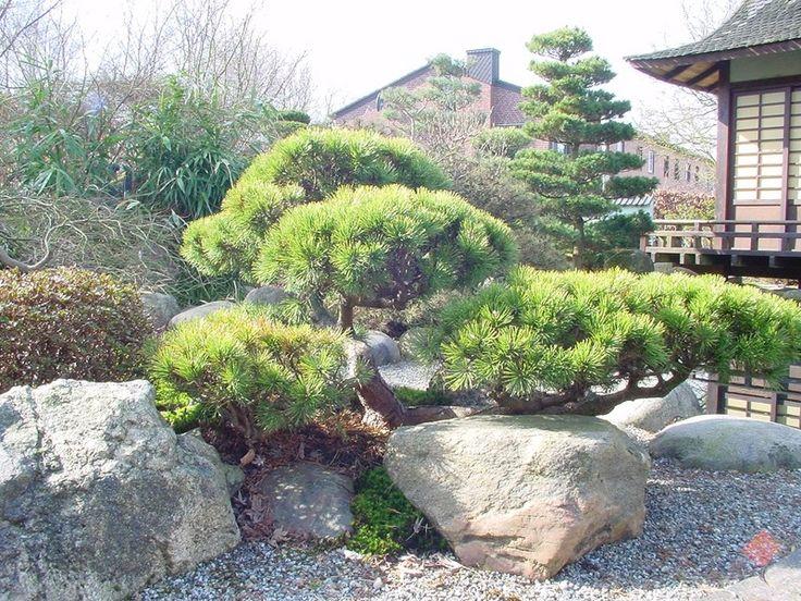 Lovely kleinen japanischen Garten Teich Google Search Garten Pinterest Kleiner japanischer Garten Teiche und Japanische