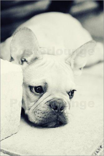 Falko Follert Art-FF77 - Französische Bulldogge