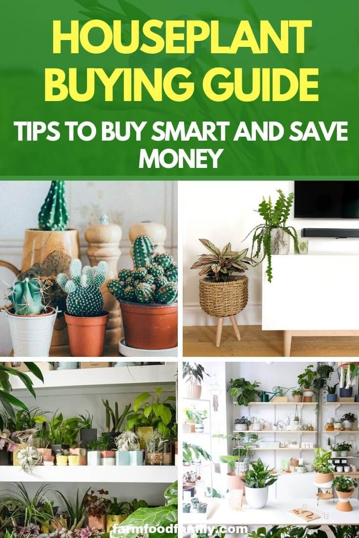 Houseplant Buying Guide Tips To Buy Smart And Save Money House