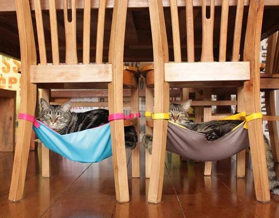 DIY Cat Stuff... Homemade Cat Hammocks for under the kitchen chairs! :)  Free Cat Tree Plans!  Pet furniture you cam make!