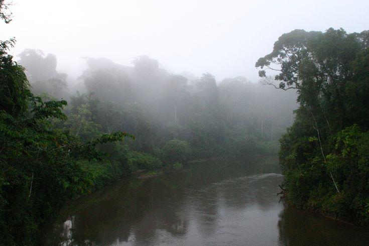 Vorschaubild: Tropischer Regenwald im Nebel -  Klima im Regenwald -  Tagesablauf