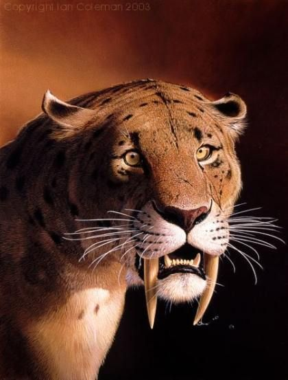 picture of a sabertooth tiger | Saber Tooth Tiger | Pictures of Cats