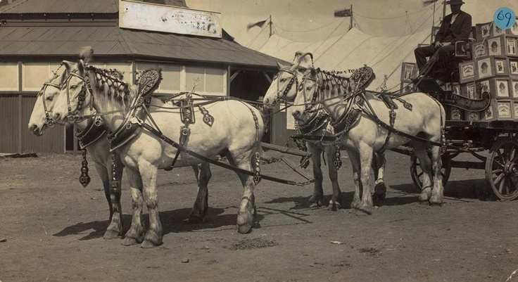 Draught Horses in Show Harness for OT Limited, Soft Drink Manufacturer, at the Royal Melbourne Show, Ascot Vale, circa 1910 - Museum Victoria