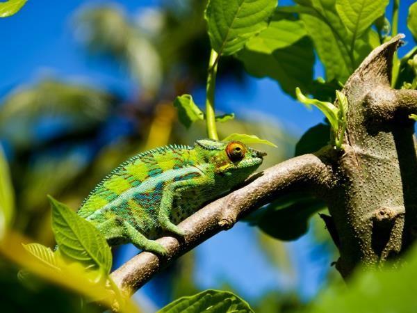 Madagascar tour, rainforest & beaches. Helping Dreamers Do