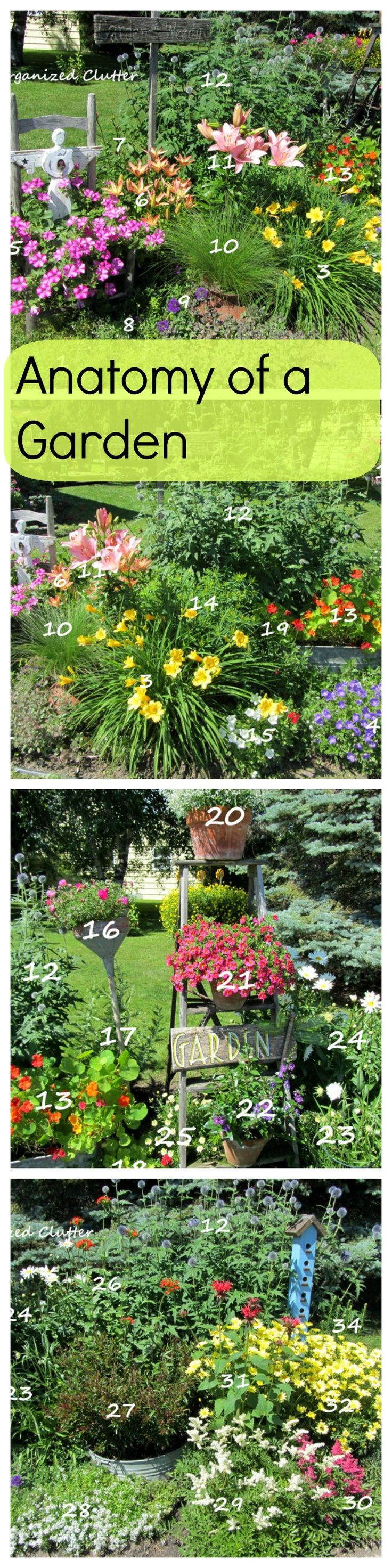 Anatomy of a Cottage Garden. Diagrammed and labeled plant list.