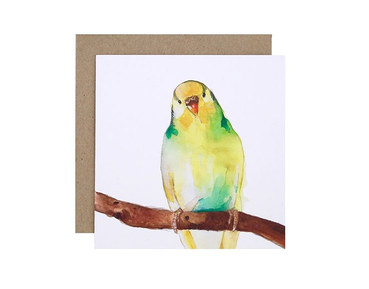 Betty the Budgie Greeting Card  Birthday, Get Well Soon or Congratulations?  For Me By Dee greeting cards are perfect for any animal lover, for any occasion!  Created and printed in Melbourne, Australia
