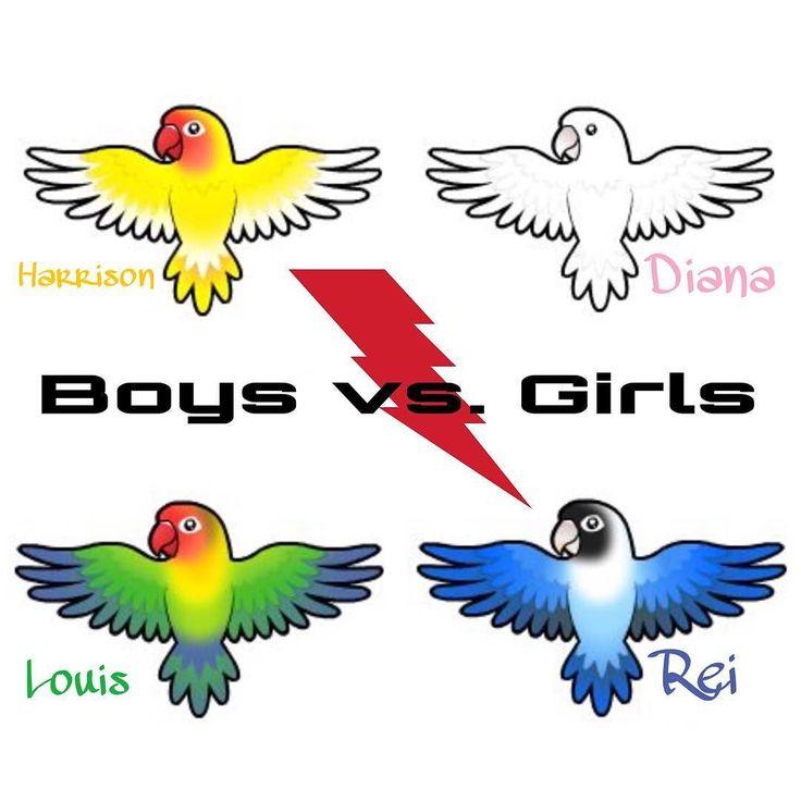 Aktuelle Situation: Jungs gegen Mädchen. Interesse ist da aber bei sich wohnen lassen wollen die Jungs die beiden noch nicht. Werde jetzt den alten Rattenkäfig für die Mädels herrichten damit sich Rei und Diana besser aus dem Weg gehen können. Finde es auch schlimm 3 verschiedene Käfige herumstehen zu haben. Jeder nur halb eingerichtet.  #lovebirds #birds #vögel #unzertrennliche #agapornis #fischeri #fischers #pfirsichköpfchen #rosenköpfchen #liebesvögel #haustier #pets #papagei #parrot…