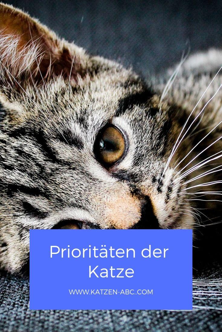 Katzen Leben Gern Nach Ihrem Eigenen Rhythmus Und Sind Oft Nur