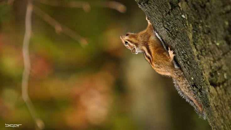 Squirrel Canon EOS 5D Mark III Lens Canon EF 70-200mm f/2.8L @ 200mm 1/160 sec f/4 ISO 800