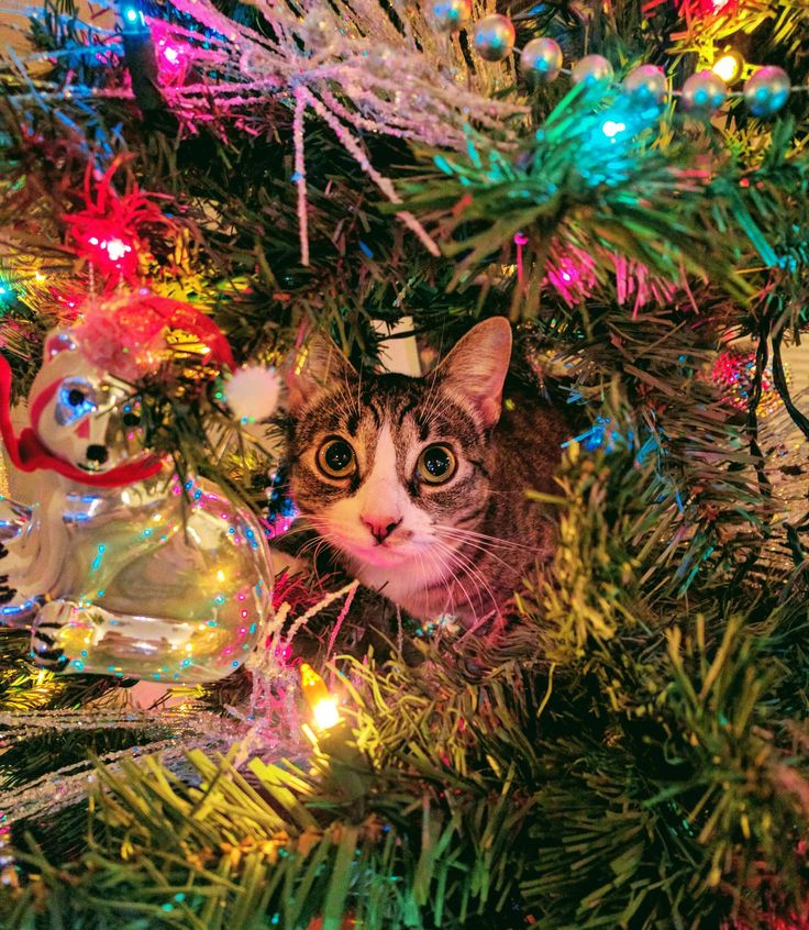 Getting Into the Christmas Spirit http://ift.tt/2fEXwTB