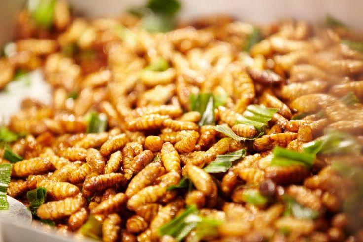 Отвратительные насекомые или еда будущего?