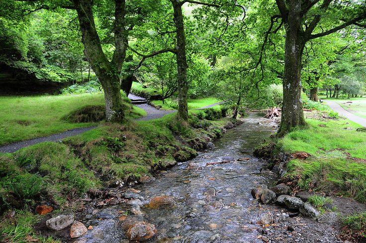 Glendalough Stream. Ireland by Jenny Rainbow