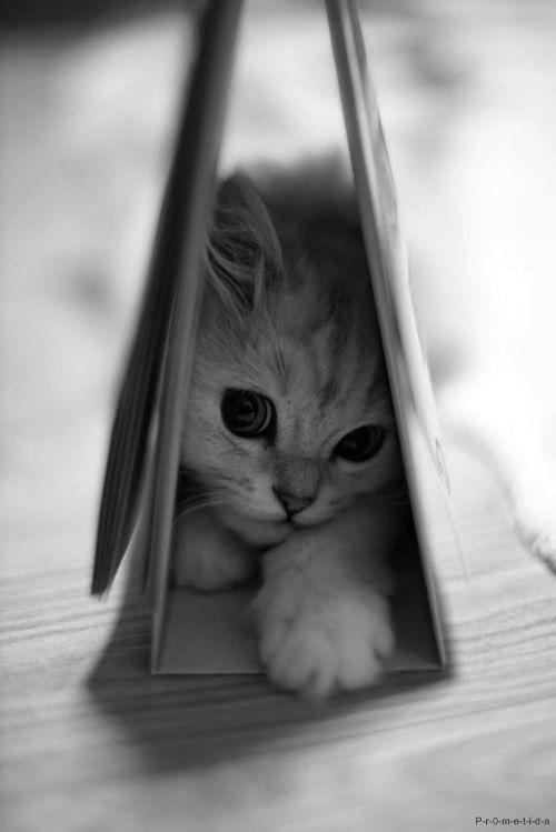 ▹ Les chats ont le don de se faufiler n'importe où..