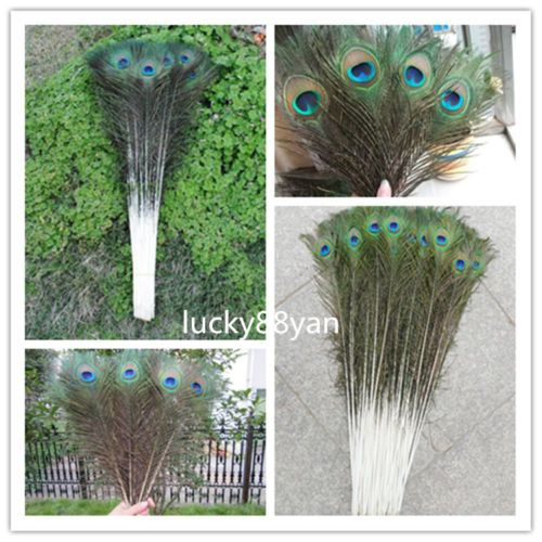 Wholesale 10-40 inches//25-100 cm beautiful natural peacock feathers eyes
