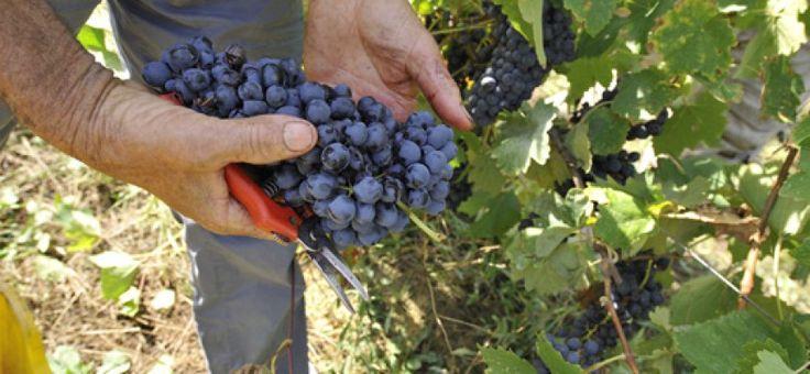 Dalla vigna al consumatore: il mercato dei vini FIVI