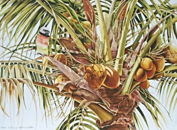 40 best watercolor palm trees tropical trees images on Pinterest