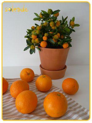 Soleado - Apelsiner - Mina recept om spanska inspiration