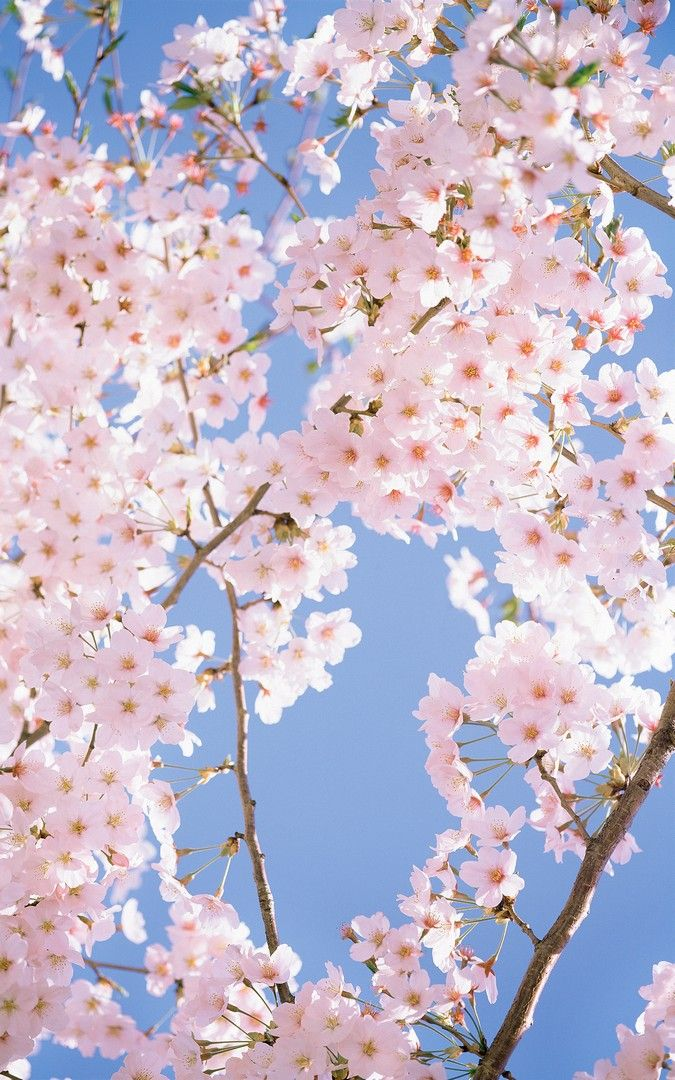 White Flowers Wallpaper Iphone Flower Wallpaper Iphone