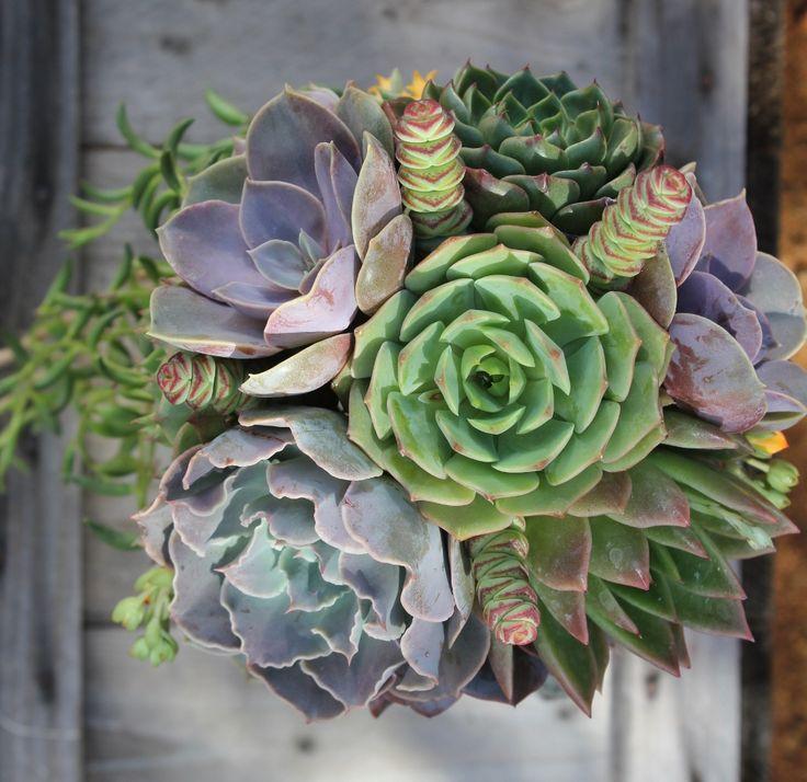 22 best succulent bouquets by thesucculentsource images on pinterest. Black Bedroom Furniture Sets. Home Design Ideas