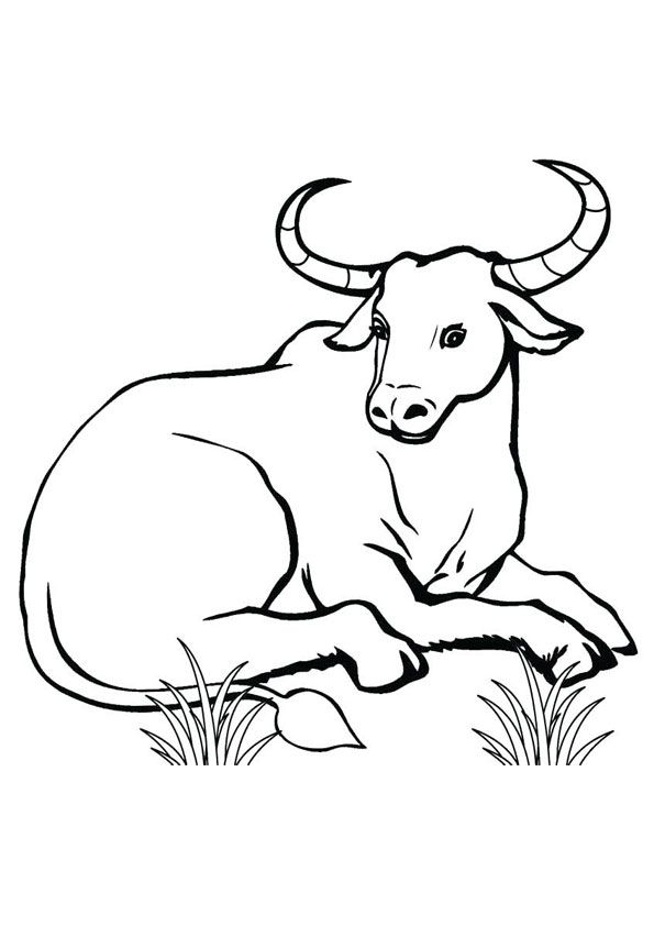 Sitting Bull Coloring Page Animal Coloring Pages Shark Coloring Pages Deer Coloring Pages