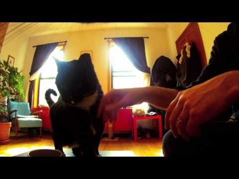 Cat Diaries: The First Ever Movie Filmed by Cats!  They make digital cameras for pets now.  Fun!