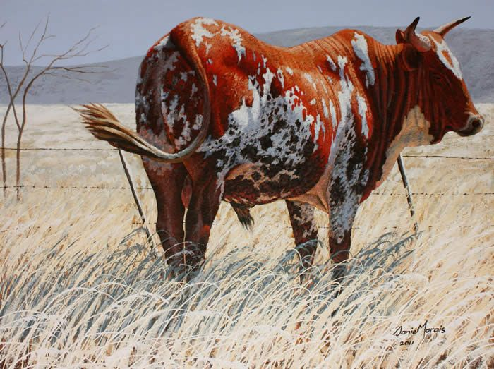 Painting by Danie Marais - Nguni's at Fence