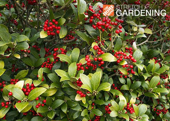 9 best images about winter garden interest on pinterest for Hardy plants for the garden