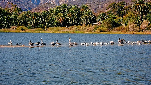 Pelicans And Gulls In Malibu Lagoon State Park 105 State Parks Lagoon Wildlife Sanctuary