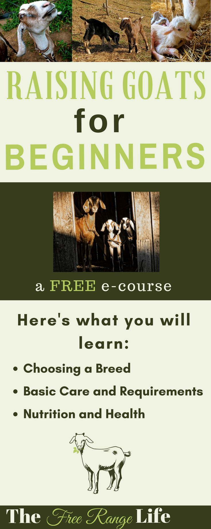 Learn everything you need to know about raising goats in this free 5 day e-course! You will be a goat pro in no time!