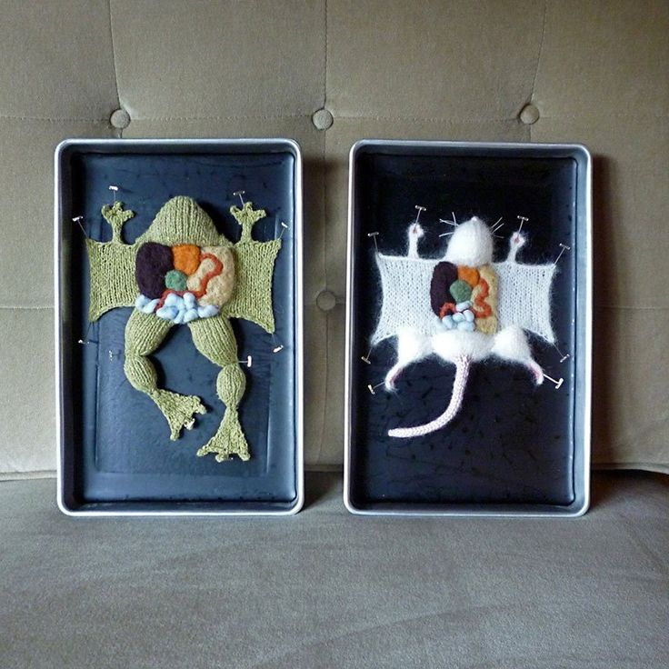 """Emily Stoneking, """"Knitted Dissections"""""""