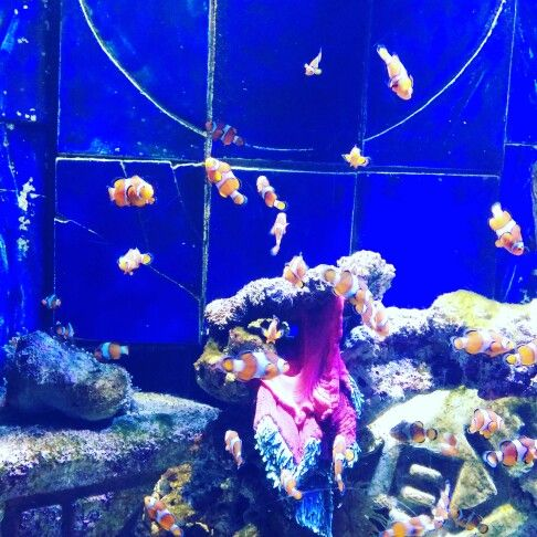 I found the extended Nemo Family   Aquarium at Atlantis