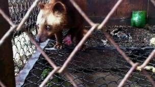 Animal em cativeiro na Indonésia