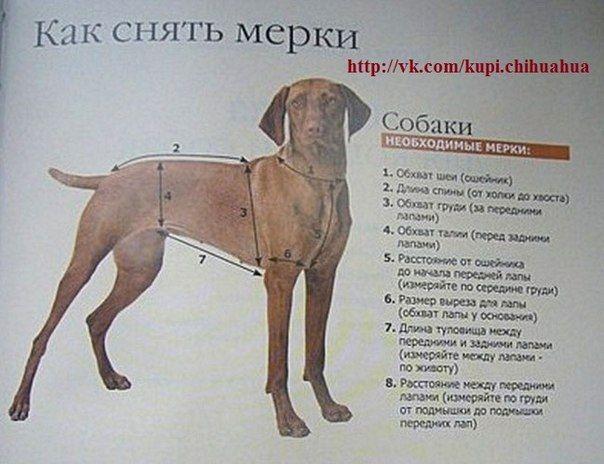 Выкройки на собак питбуль