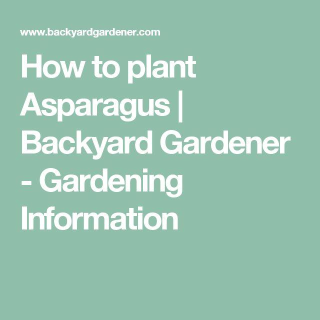 How to plant Asparagus | Backyard Gardener - Gardening Information