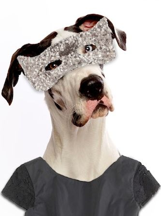 Mini-Pup Is The Web's Latest Four-Legged Fashion Icon #Refinery29