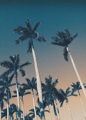 Caroline Salde - West Palm Beach bitches! A photograph of tall palm trees agains a colorful sky.