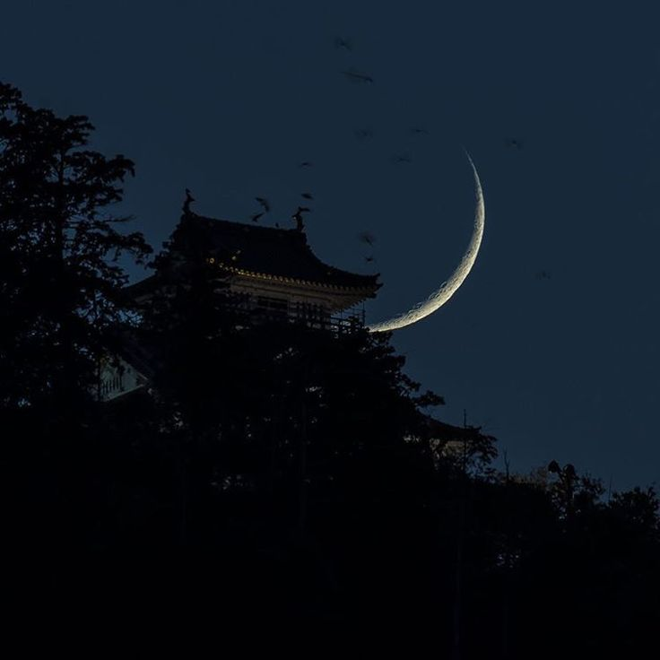 本日の月。三脚セットしスタンバイしたら鳥が大量に岐阜城の屋根に飛来しました。(この後屋根にズラーっと整列)公園でハトに餌をやるおじさんみたいな事はしてません😂 #nightimages#nightview#japan_night_view#tokyocameraclub#ptk_night#ptk_japan#loves_nippon#lovers_nippon#ig_japan#jp_gallery_member#ig_worldclub#ig_today#team_jp_#icu_japan#wonderful_places#super_photolongexpo#IG_Color#instagram#team_jp_skyart#igworldclub