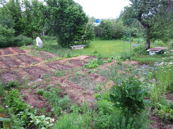 Огородные дела. Грядки готовы и засажены.