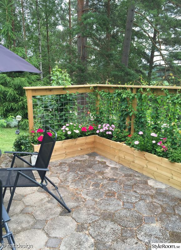 Planters With Climbing Flowers Used As A Divider Backyard