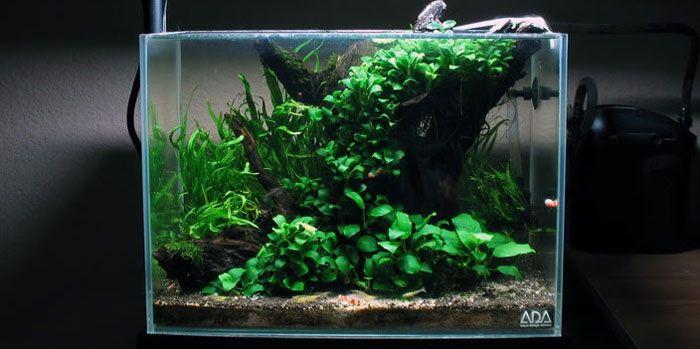 Top 5 Best Aquarium Plants for Aquascaping | Aquatic Mag ...