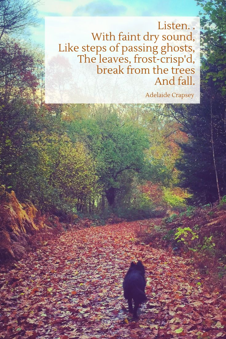 Autumn colours | autumn leaves | an autumn poem by Adelaide Crapsey