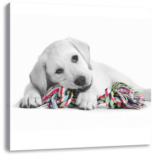 East Urban Home Playing Labrador Puppy Photographic Print On Canvas Durable Dog Toys Dog Toys Best Dog Toys