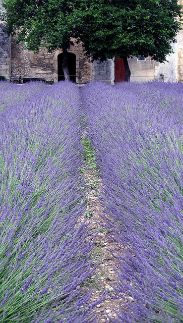 Provence ~ France  I can almost smell the lavender.