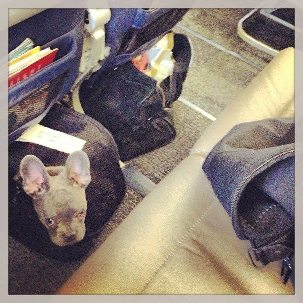 Tips for Traveling With Pets: Airline and Hotel Policy Roundup
