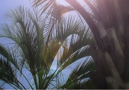 It is the palm tree planted in kindness.  ヤシの木 植栽施工...