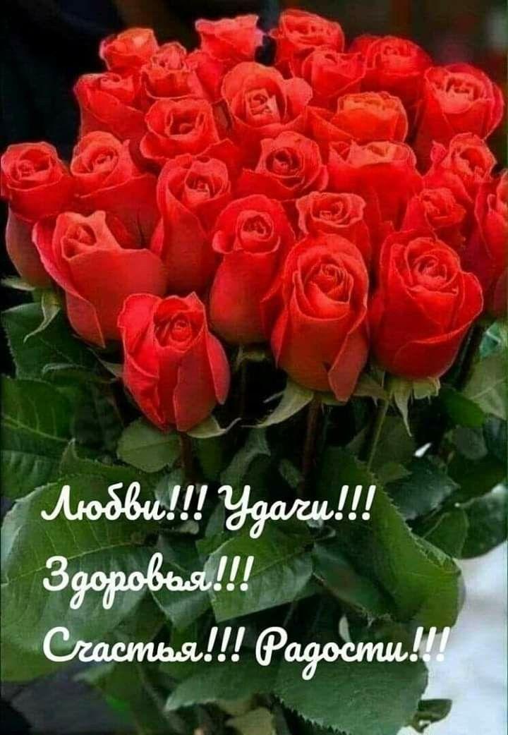 Pin By Pearl On Dobra I Schastya Birthday Wishes Flowers Happy Birthday Wishes Cards Happy Birthday Flower