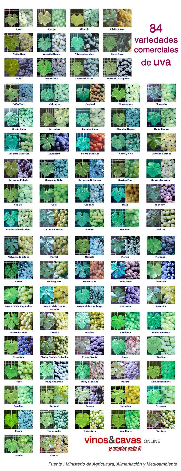 84 variedades de uva