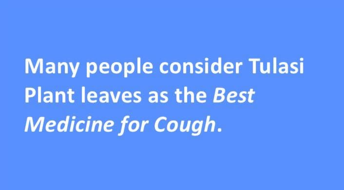 Many people consider #Tulasi Plant leaves as the #Best #Medicine for #Cough.