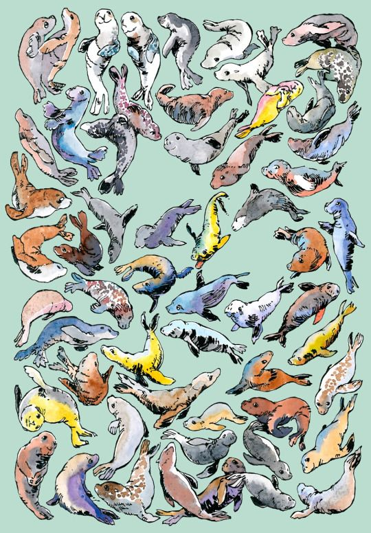 55 Grey seals