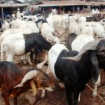 Ram sellers in Zaria cry over low patronage